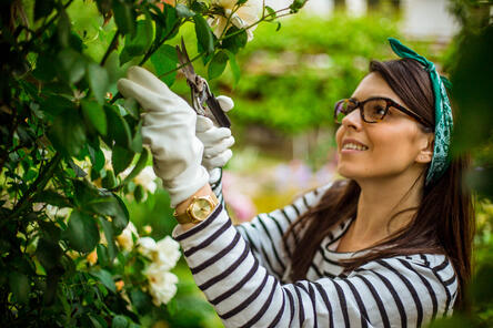 Woman pruning a shrub